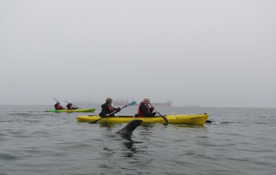 Kayaking and 4×4 drive to Pelican Point Walvisbay